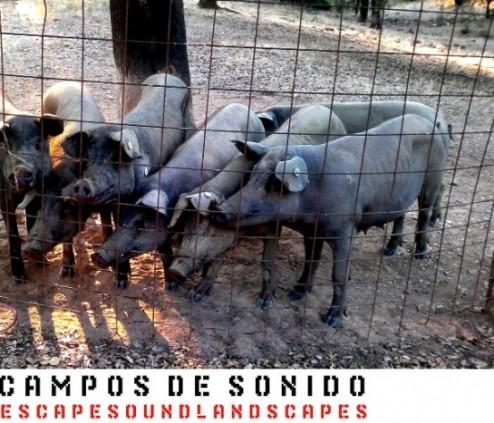 13-01-Campos-de-Sonido-Huelva